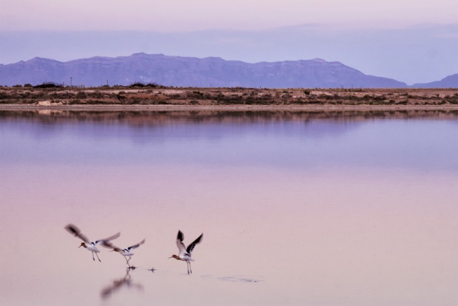 new mexico, white sands, national monument, national park, south, sunrise, early morning, birds, lake, mountains, closed, early, camp site, fly, alamogordo, nm, southwest, photography, photo, settings, sunset