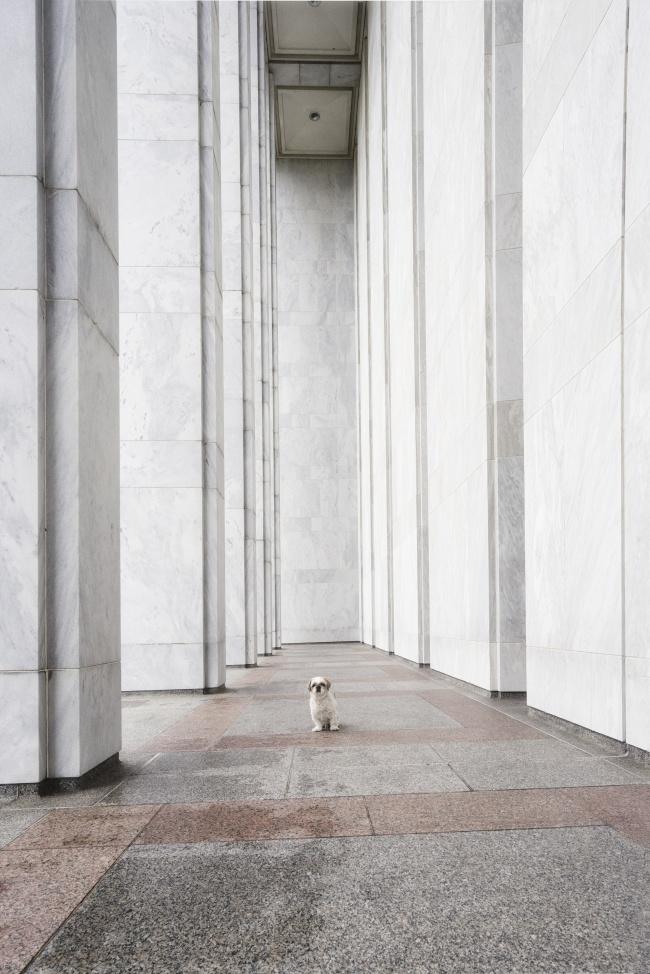 frankenstein woopan, frankie, shih tzu, washington dc, columns, repeating, environment, james madison, memorial building, library of congress, architecture, shih tzu, model, dog, puppy, cute, little dog