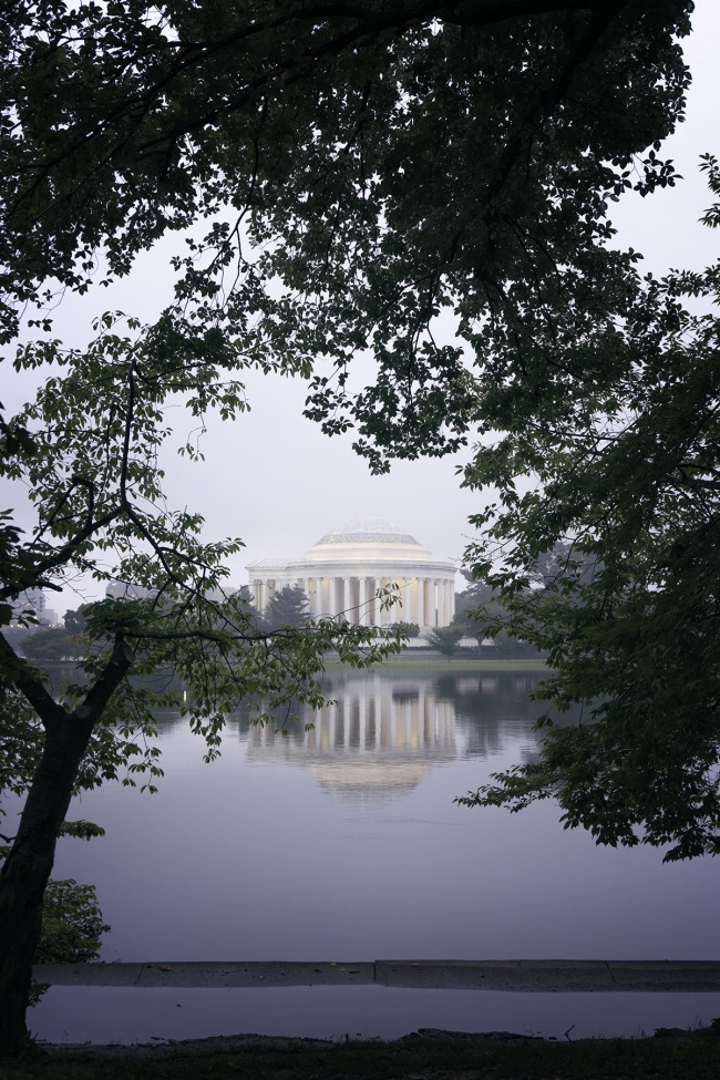 Jefferson Memorial, tidal basin, cherry blossom trees, fog, morning, sunrise, early morning, reflection, puddle, water, national mall, trees, leaves, founding father