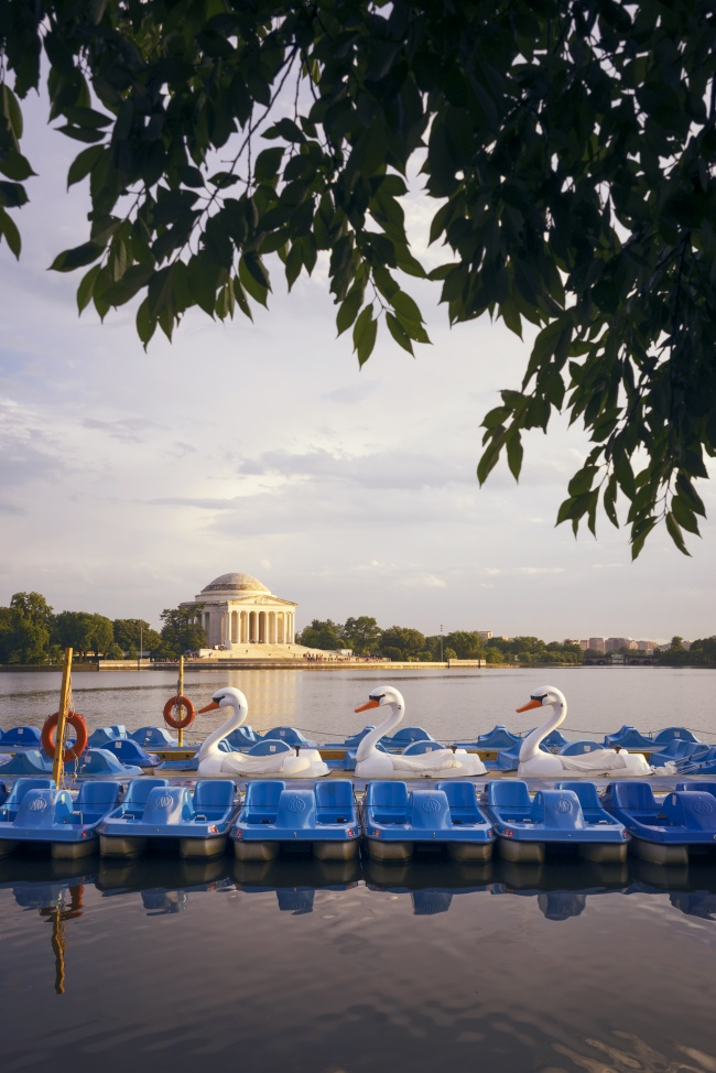 washington dc, summer, getaway, travel plans, tidal basin, paddle boats, swans, jefferson memorial, dc, reflection, sunset, fun, sun, summer