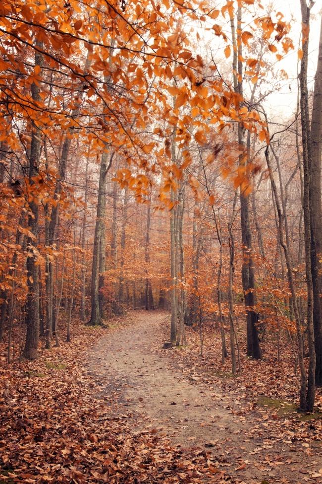 Great Falls Trail, great falls park, leaves, trees, autumn, fall, virginia, visit virginia, trail, hike, walk, northern virginia, great falls, mclean