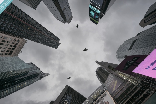 Times square, looking up, architecture, buildings, city center, manhattan, new york, nyc, birds, billboards, lights, cloudy, skies, dark, looking up, visit, travel, tourist, midtown, broadway,