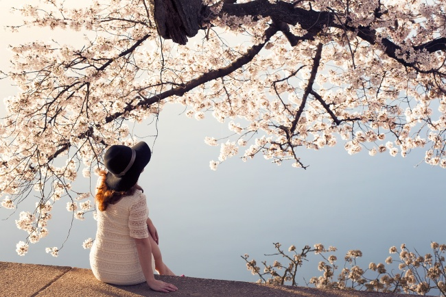 Cherry Blossom Lady in DC, washington dc, cherry blossoms, tidal basin, photographer, photo, photoshoot, reflection, cherry trees, peak bloom, sakura, visit, people, lady, sunrise, early morning,