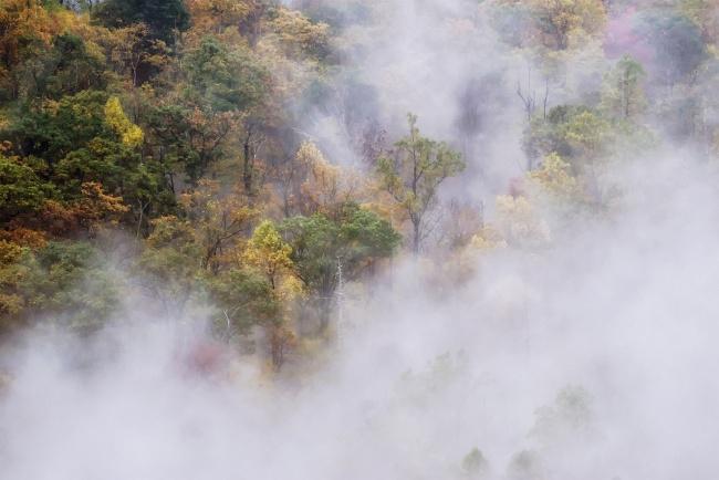 Shenandoah National Park, Virginia, thorton gap, blue ridge mountains, fog, early morning, mountain, trees, fall, autumn, color change, leaves, visibility, sony, lens, camera, travel, visit, national park, va, skyline drive, appalachian trail,