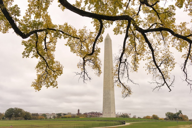 fall, autumn, national mall, washington monument, constitution avenue, early morning, sunrise, cloudy, washington dc, constitution gardens, alarm, branches, yellow,