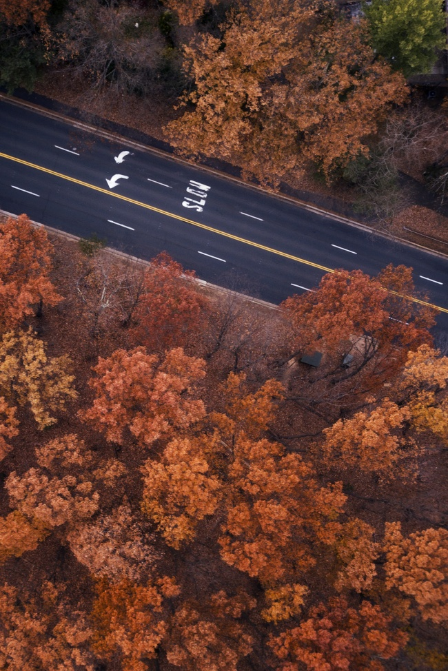 Slow, reston, lake anne, trees, fall foliage, orange, red, virginia, northern virginia, fairfax, drone, dji, mavic pro, flying, up high, weekend, outdoors, va,