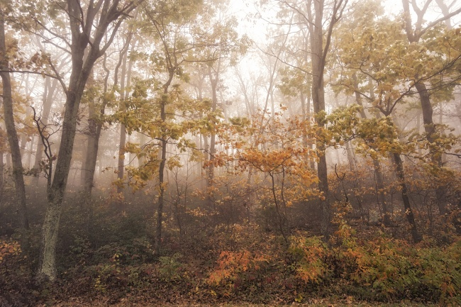 Shenandoah National park, fog, skyline drive, fall, autumn, color change, leaves, trees, editing, photography, photo, photographer, virginia, va, national park, thorton gap,