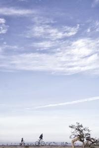 Dog Beach San Diego, ocean beach, san diego, california, socal, bikes, path, hike, beach, travel, west coast,
