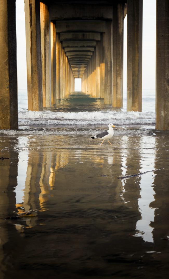 Scripps Pier, La Jolla, San Diego, California, sunrise, fog, repetition, reflection, sun, sand, beach, seagull, early morning, west coast, travel, visit, california beaches, Ellen Browning Scripps Memorial Pier, university of San Diego, Oceanography
