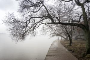 fog, tidal basin, winter, weather, umbrella, stranger, candid, washington dc, national mall, moody, cherry blossom trees, trunk, photowalk,