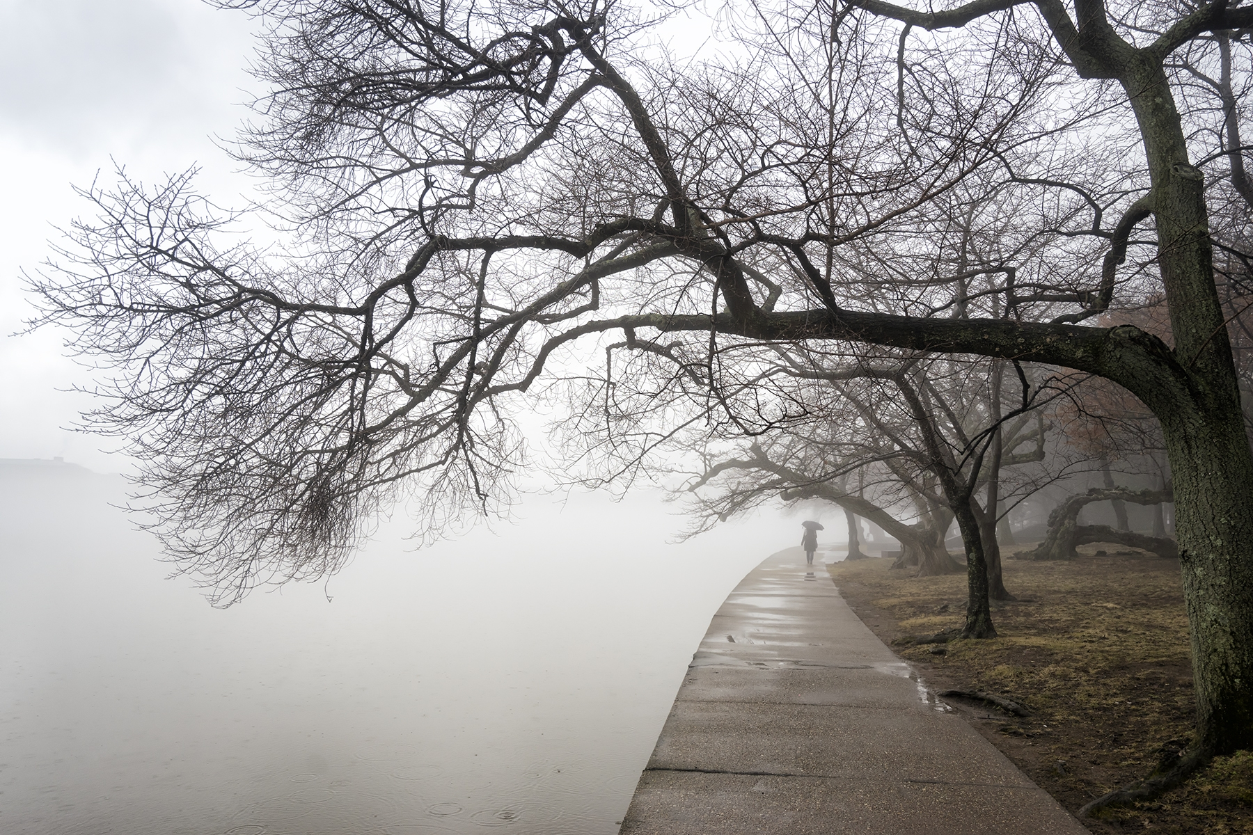 fog, tidal basin, winter, weather, umbrella, stranger, candid, washington dc, national mall, moody, cherry blossom trees, trunk, photowalk,