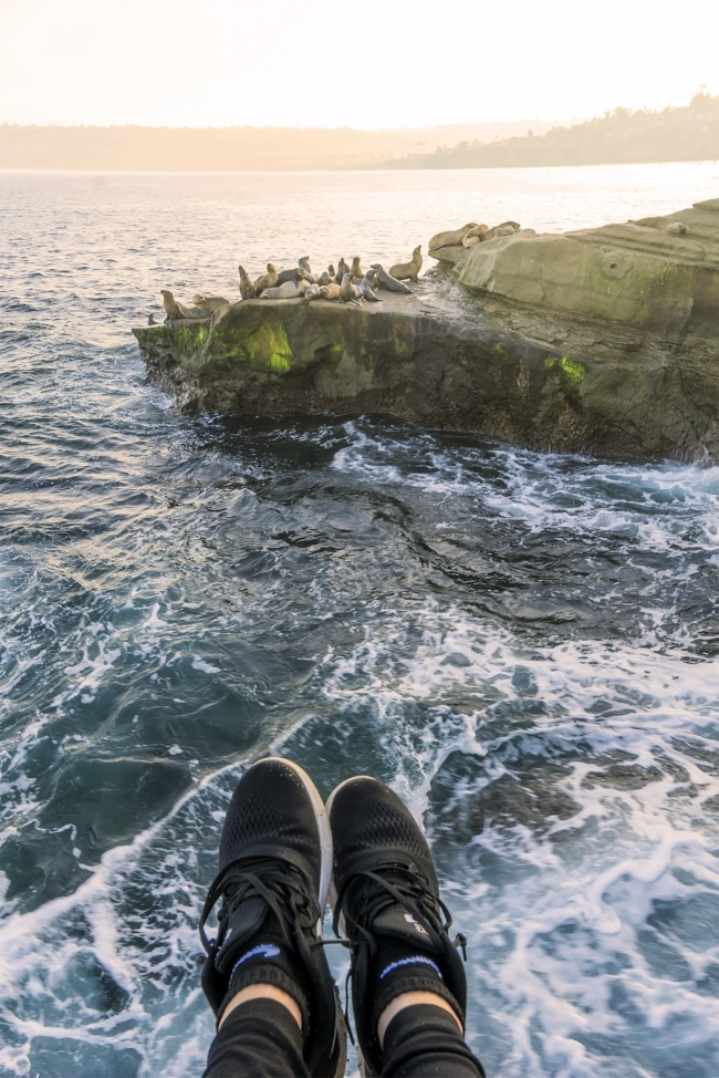 la jolla, san diego, sea lions, shoefy, early morning, sunrise, west coast, pacific ocean, la jolla cove, la jolla beach, seals, relax, california, cali, socal,