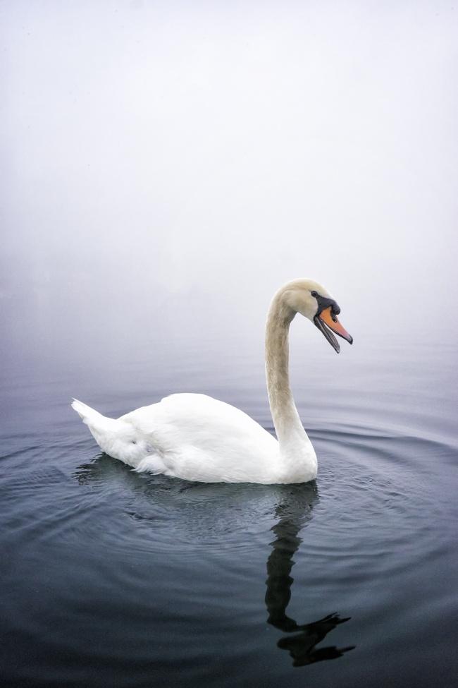 Lake Eola Park, orlando, florida, disney, universal studios, swan, fog, early morning, sunrise, birds, travel, family vacation, happy
