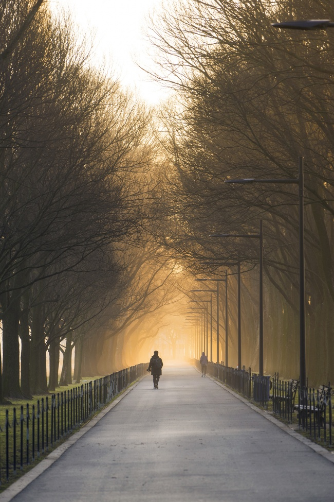National Mall, washington dc, trees, fog, haze, snow, winter, early morning, sunrise, reflecting pool, lincoln memorial, trees, glow, light, tunnel, weekend, weather,