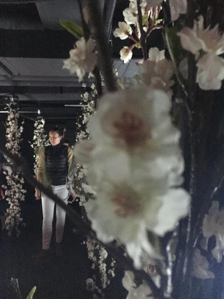 Cherry Blossom Dream, artechouse, Sakura Yume, immersive, interactive, art, gallery, museum, visit, japenese, koi fish, cherry blossom, spring,