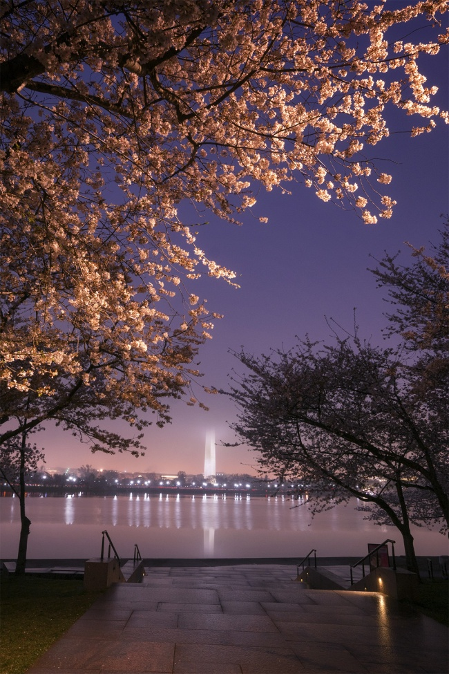 Washington DC, cherry blossoms, dawn, early morning, sunrise, fog, tidal basin, national mall, fdr memorial, washington monument, tripod, camera settings, free downloads, spring, flowers, night