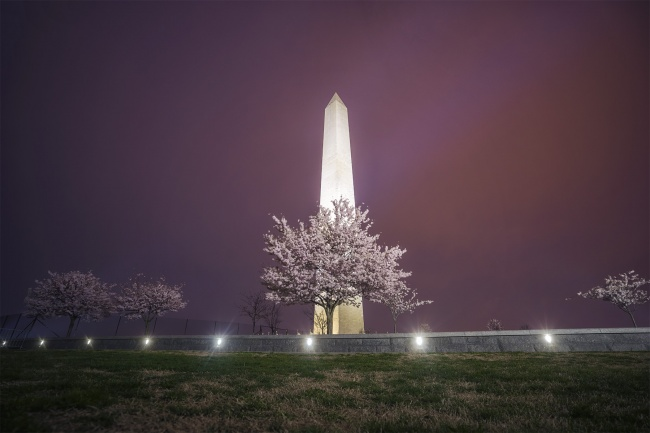 washington dc, washington monument, cherry blossoms, national mall, spring, early morning, blue hour, instameet, desintation dc, visit washington dc, cherry blossom festival, cherry blossom fest, stellas popkern