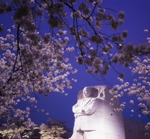 Martin Luther King Jr Memorial, Cherry Blossoms, tidal basin, national mall, sakura, spring, predawn, early morning, pink flowers, frame, dr king, washington dc, camera settings, exposure