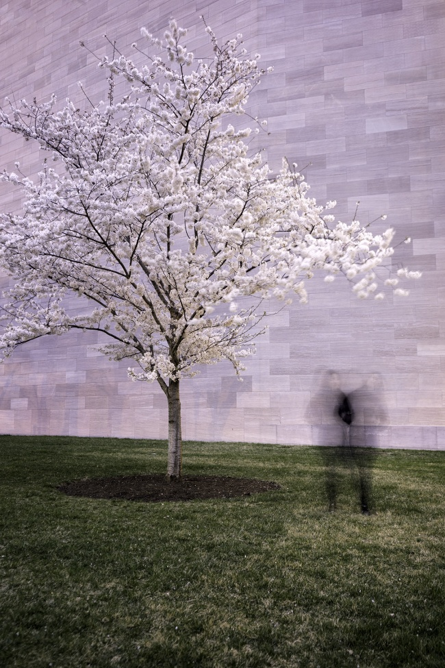 cherry blossoms, national gallery of art, nga, exterior, buildings of dc, architecture, spring, long exposure, national mall, early morning, emojis in the wild, experiment, washington dc, museum