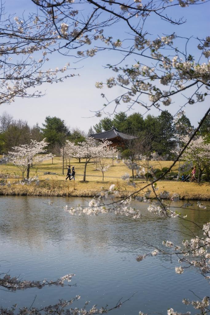 Botanical Garden, meadowlark botanical gardens, vienna, virginia, va, nova, parks, korean bell garden, pagoda, cherry blossoms, lake, trees, spring,