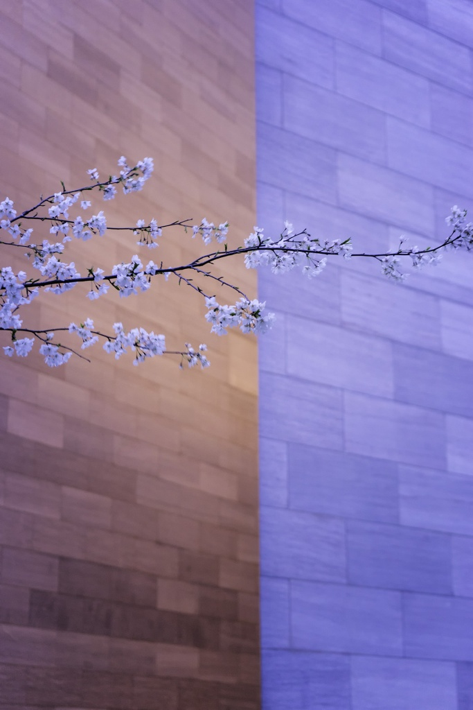 The National Gallery of Art, Washington DC, nga, that nga wall, cherry blossoms, sunrise, contrast, tones, corner, architecture, building, spring, national mall, abstract, color tones, final cut