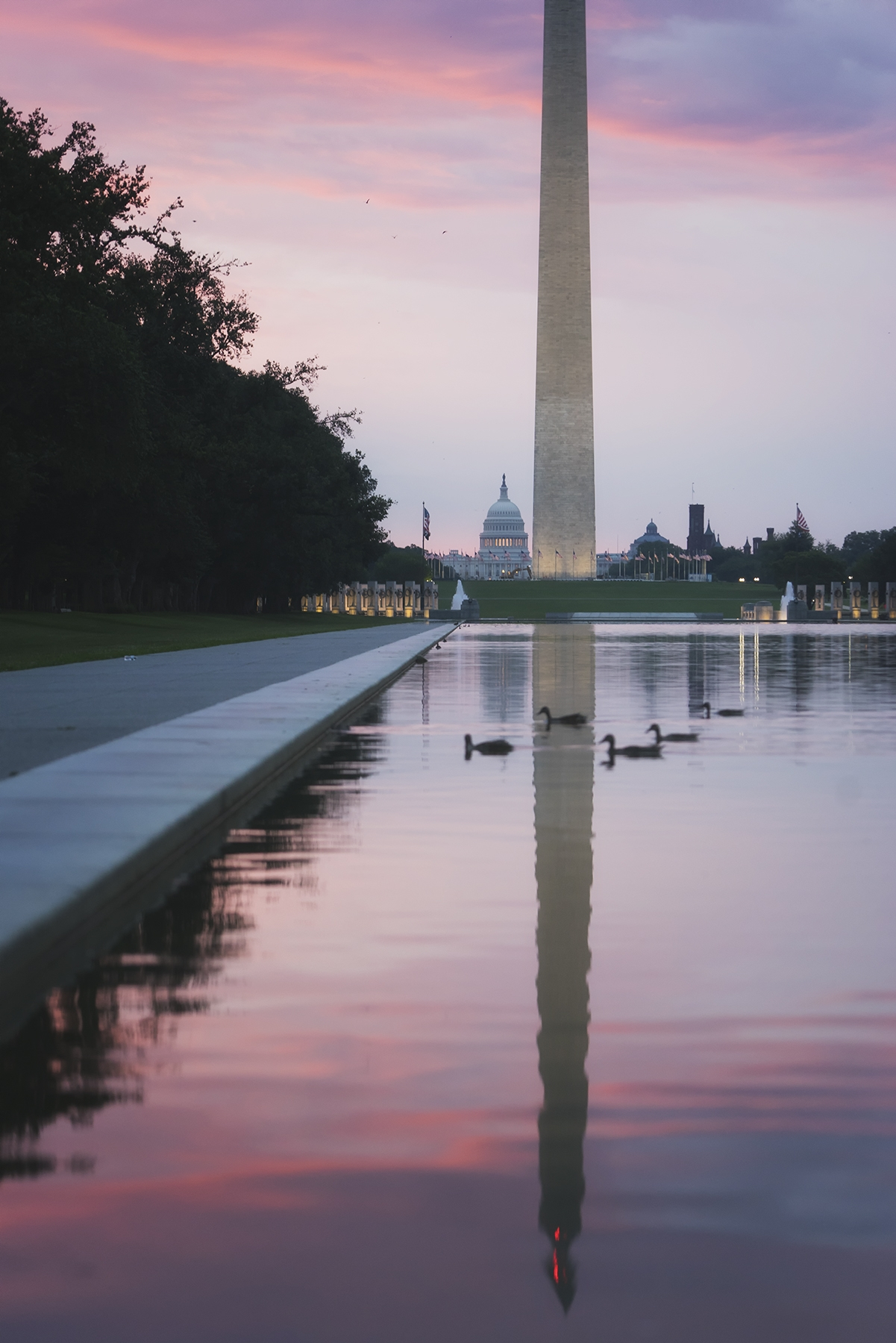 Reflecting Pool, washington dc, national mall, sunrise, pink, purple, ducks, washington monument, us capitol, summer, humid, hot, weather, reflection, wwii memorial, location, photo challenge