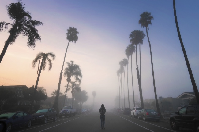 North Park, San Diego, socal, new years day, early morning, fog, sunrise, palm trees, university heights, california, ca, utah st