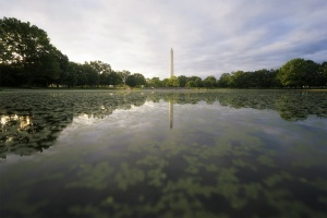 Garden in DC, constitution gardens, sunrise, early morning, photowalk, washington dc, national mall, washington monument, friends, pond, relax, nature, trees