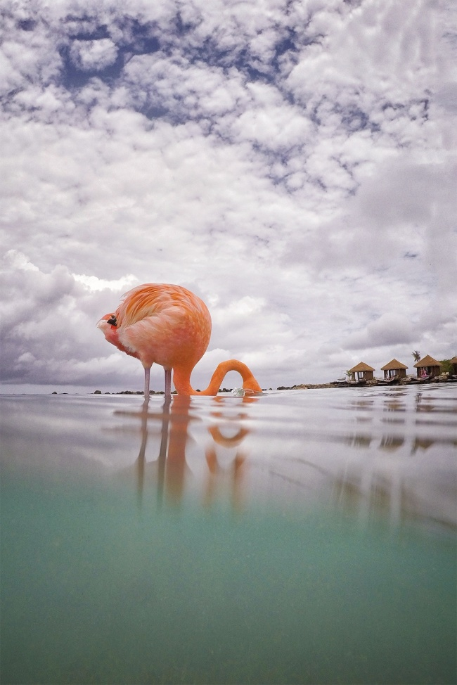 flamingo beach, gopro, hero 5 black, aruba, caribbean, island life, under over water, beach, caribbean ocean, visit, renaissance island, vacation, gopro accessories