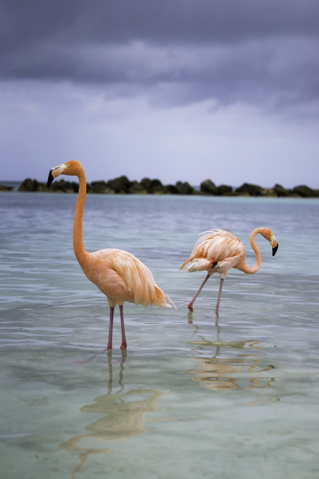 Flamingo Beach, Aruba, caribbean, caribbean island, island life, flamingos, pink, renaissance, private island, boat, beach, reflection, rain, weather, visit, travel,