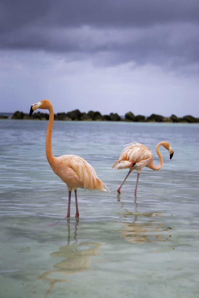 Flamingo Beach, Aruba, caribbean, caribbean island, island life, flamingos, pink, renaissance, private island, boat, beach, reflection, rain, weather, visit, travel,