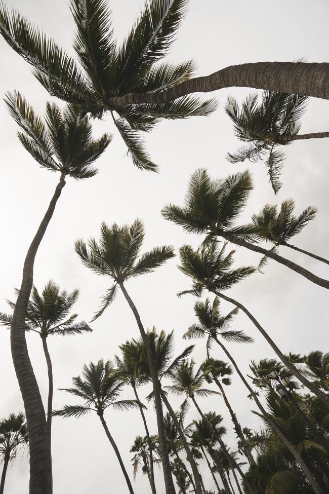 aruba, palm trees, looking up, caribbean, island, hurrican, weather, moody, clouds, sunny, weathermen, travel, visit, vlog, island life, transportation, getting around