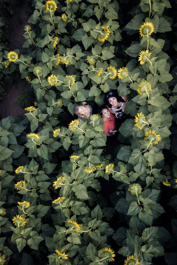 Summer, Sunflower Fields, marlyand, mckee beshers, sunset, sunflowers, yellow, selfie, drone, mavic pro, dji, mosquitos, flowers,
