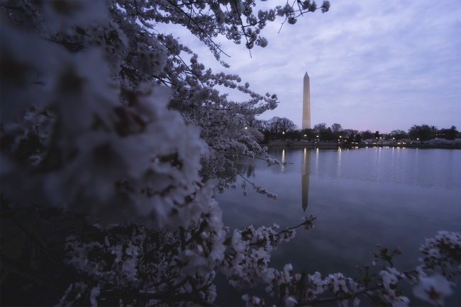 Washington DC, Spring Cherry Blossoms, travel, washington monument, sunrise, camera settings, east coast, west coast, comfort zone, moody, traveling alone,