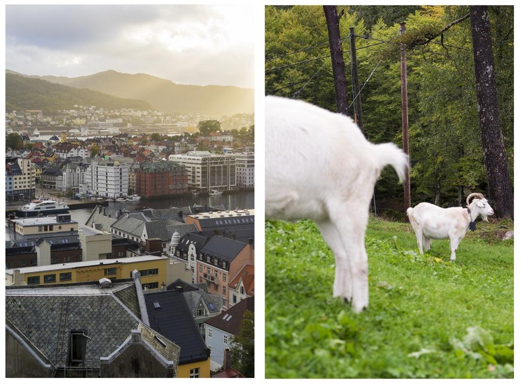 Bergen, Norway, Fløibanen funicular, mt fløyen, landscape, rain, weather, travel, visit, scenery, west coast, mountain, hike,
