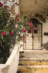 Oranjestad, Aruba, caribbean, island, island life, cat, facade, buildings, color, pink flowers, street photography, city, house portrait, worn,