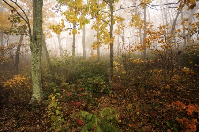 Skyline Drive, Shenandoah National Park, fall, autumn, leaves changing, photography, road trip, scenic drive, virginia, va, fog, weather