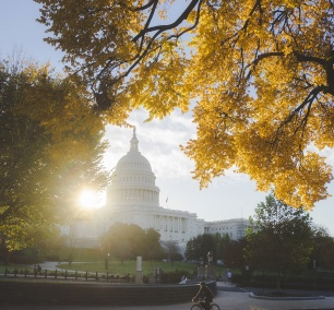 United States Capitol, Washington dc, us capitol, fall, autumn, capitol hill, government, architecture, office building, national mall