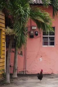 Island of Aruba, aruba, caribbean, rooster, visit, travel, girls trip, Oranjestad, island, summer vacation,