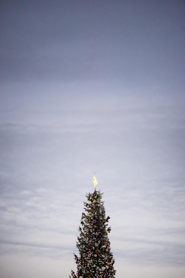 US Capitol, Christmas Tree 2018, washington dc, ornaments, reflecting pool, ornaments, decoration, lights, holiday season, merry christmas
