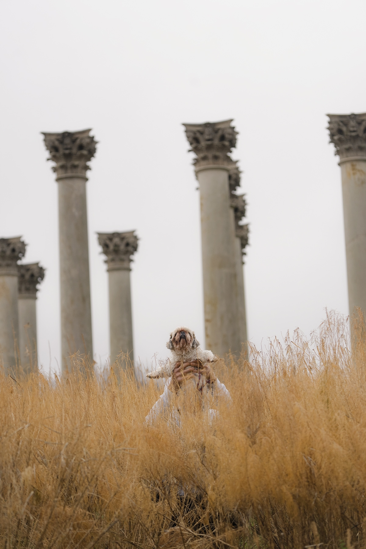 United States National Arboretum, northeast dc, washington dc, Capitol Columns, botanical gardens, fall, autumn, corinthian columns, anacostia river, new york avenue,