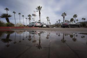 La Jolla Shores, Palm Trees, rain, san diego, puddles, parking, where to park, palm trees, la jolla, beaches, reflection, socal, southern california