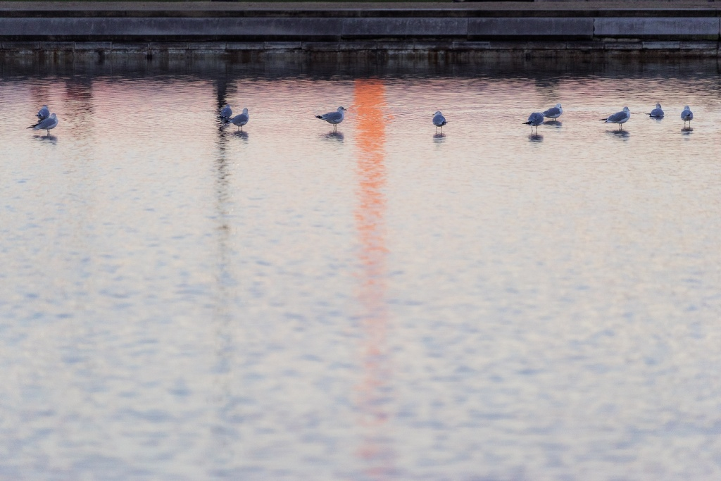 washington monument, washington dc, reflecting pool, us capitol, sunrise, early morning, ducks, birds, national mall,