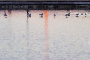 washington monument, washington dc, reflecting pool, us capitol, sunrise, early morning, ducks, birds, national mall,
