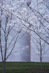 Cherry Blossom Predictions 2019, national park service, nps, washington dc, cherry blossom festival, spring, cherry blossoms