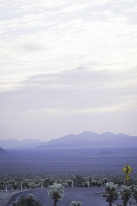 joshua tree national park, cholla cactus garden, road, winter, national park, cacti, southern california, visit, travel,