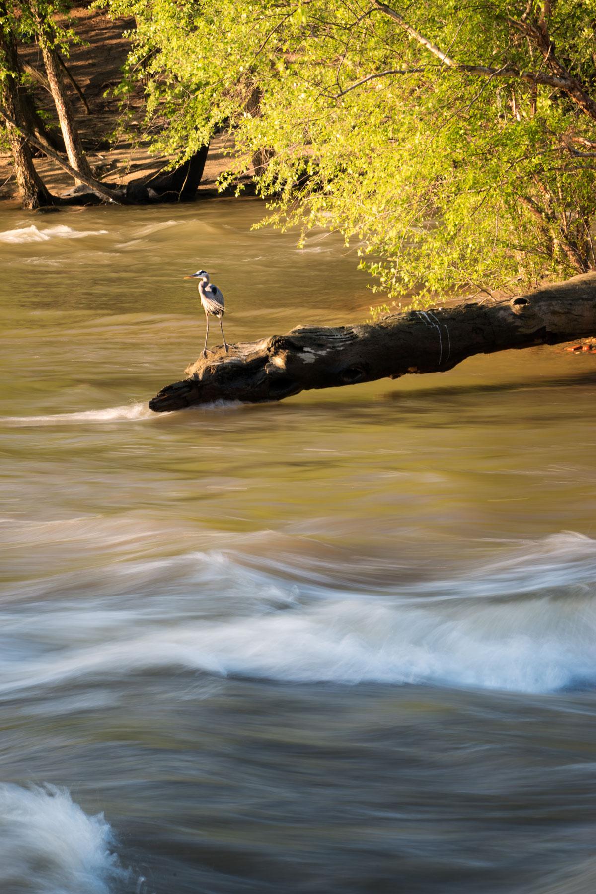 james river, long exposure, richmond, virginia, va, capital, pipeline trail, tree log,