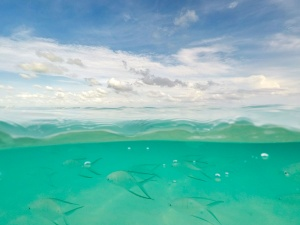 turks and caicos, gopro, polarpro, fiftyfifty, under over camera, dome, caribbean, school of fish, underwater, travel, vacation