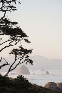 ecola state park, early morning, cannon beach, oregon, haystack rock, tree, branches, seaside, ecola state park photos, ecola state park crescent trail, oregon, travel, visit