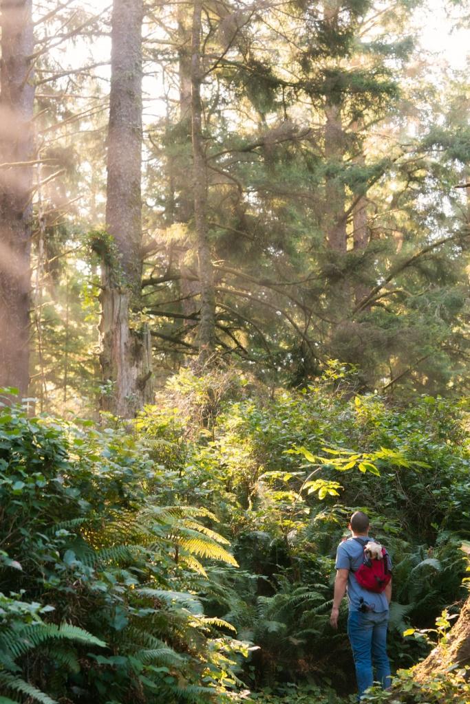 crescent beach trail, hikes, oregon, cannon beach, forrest, trees, k9 sport sack, shih tzu, beach trail, hiking